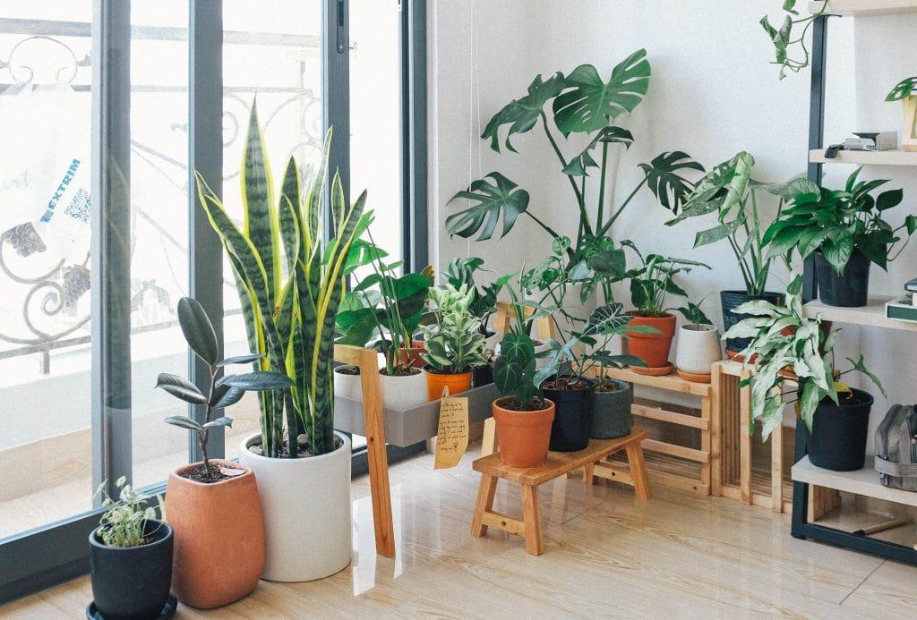 Studio Flat Plants